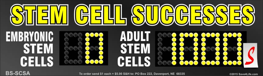 Stem Cell Successes 3.5x12 Bumper Sticker